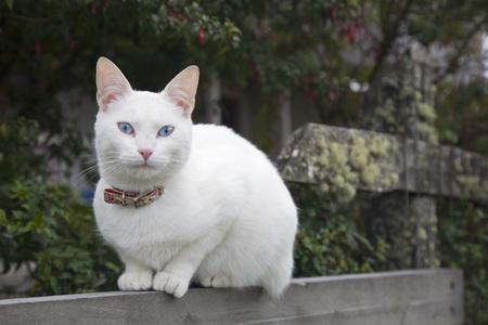 Cat, Portrait LANG_EVOIMAGES
