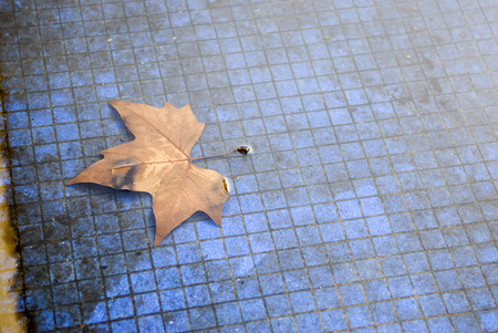 cruddy: Autumn Leaf Floating On Tiled Pond,Elevated View