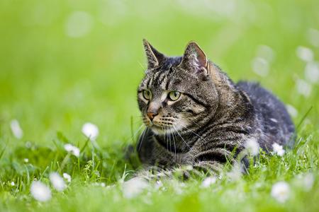 Cat Lying In Meadow