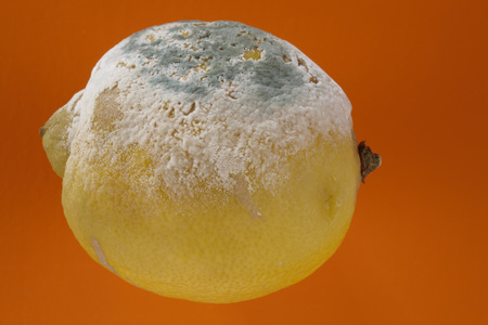 disgusted: Moldy Lemon, Close-Up LANG_EVOIMAGES