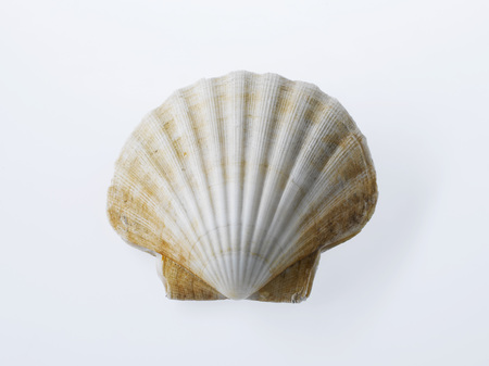 Raw Scallop In Shell, Close-Up LANG_EVOIMAGES