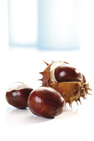 Horse Chestnuts (Aesculus Hippocastanum), Close-Up