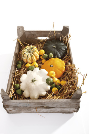 Pumpkin Gorgonzola (Cucurbita Pepo) And Pattypan Squash LANG_EVOIMAGES
