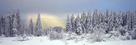 Germany, Baden-W�Rttemberg, Schwarzwald, Snowscape