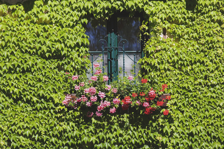 Austria, Facade With Window, Ivy And Flower LANG_EVOIMAGES