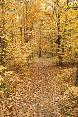 Germany, Rhineland-Palatinate, Wood, Leaves, Autumn Colours LANG_EVOIMAGES