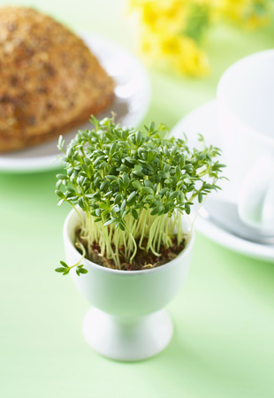 Cress Sprouts In Egg Cup, In Background Coffee Cup And Bread Roll On Plate