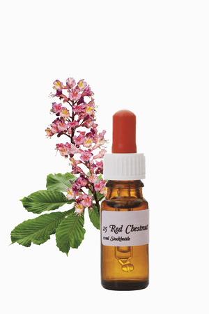 Bottle With Bach Flower Stock Remedy,Red Chestnut (Aesculus Carnea),Close-Up