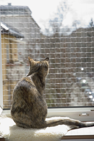 Domestic Cat On Window Sill, Safety Net, Rear View