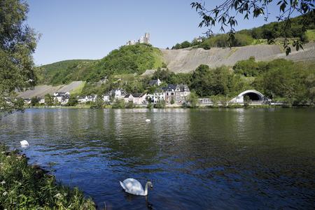 Germany,Rhineland-Palatinate,Bernkastel-Kues,Swans On Moselle River