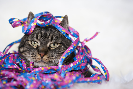 Male Cat Covered With Streamers,Close-Up