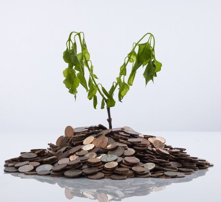 Withered Plant On Pile Of Coins