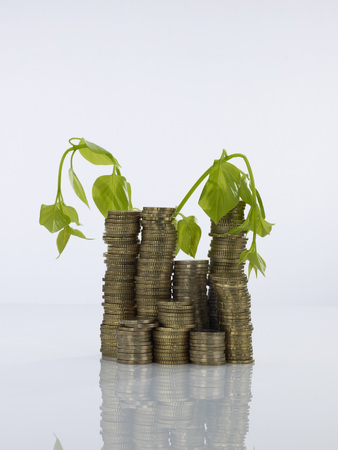 Withered Plant On Stack Of Coins