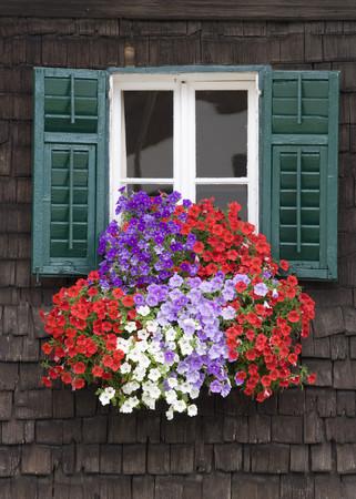 Austria,Land Salzburg,Flachgau,Mattsee,Flowers On Window