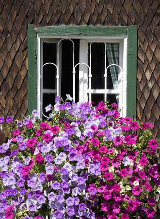 Austria, Land Salzburg, Flachgau, Berndorf, fiori sulla finestra