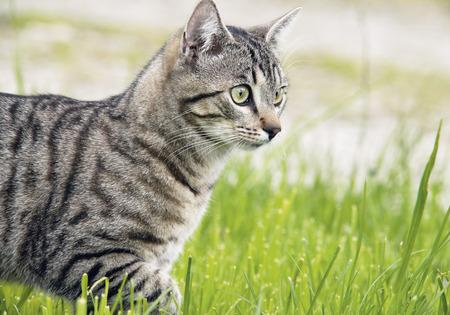 Germany,Cat In Meadow