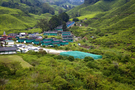 Malaysia,View Of Tea Plantation With Village