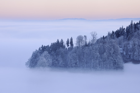 Europe,Switzerland,Canton Of Bern,View Of Hill With Forest At Dawn LANG_EVOIMAGES
