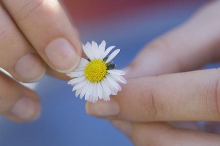 plucking: Germany,Bavaria,Woman Picking Flower Petal,Close Up