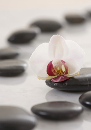 White Orchid On Hot Stones On White Background,Close Up LANG_EVOIMAGES