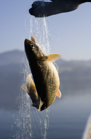 Austria,Mondsee,Fish Trapped In Fishing Net LANG_EVOIMAGES