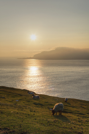 Ireland,Province Connacht,County Mayo,View Of Animals Grazing On Achill Island At Sunset