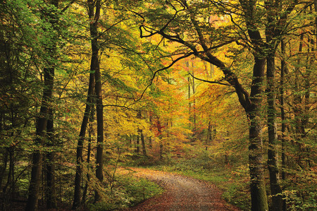 Europe,Germany,Baden-Wãƒâ¼Rttemberg,View Of Forest In Autumn