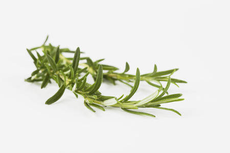 Close Up Of Rosemary Twig On White Background LANG_EVOIMAGES