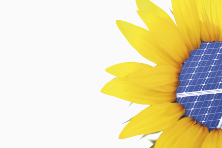 Close Up Of Sunflower With Solar Panel On White Background