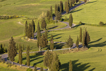 Italy,Tuscany,Monticchiello,View Of Winding Road With Cypress Trees