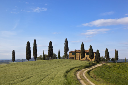 Italy,Tuscany,Crete,View Of Farm With Cypress Trees