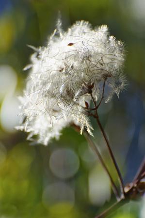 Germany,Bavaria,Close Up Of Feather Like Blossom