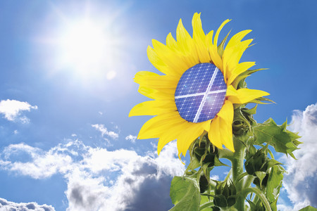 Germany,Sunflower With Solar Panel Against Blue Sky With Sun
