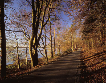 Germany,Bavaria,Upper Bavaria,View Of Road Passing Through Trees