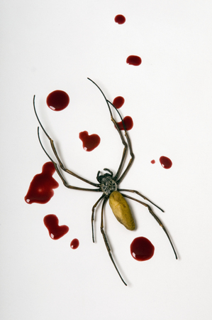 Dead Spider With Blood Drops