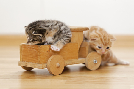 Germany,Kittens Sitting On Wooden Toy,Close Up LANG_EVOIMAGES