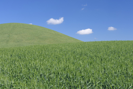 Europe,Spain,Andalusia,View Of Hilly Green Wheat Field