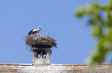 Austria,Burgenland,Rust,Stork With Nest On Roof Top LANG_EVOIMAGES