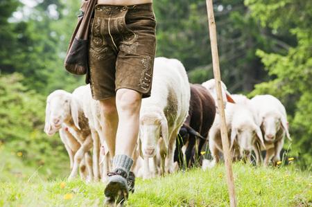 Austria,Salzburg County,Shepherd Herding Sheep On Mountain