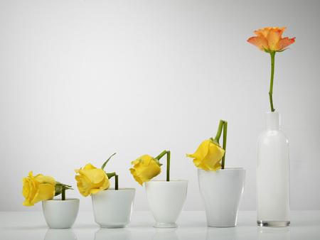 Chart Built Of Rose Flowers Vases Against Gray Background