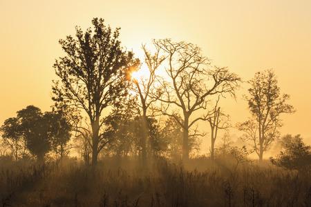 India,Uttarakhand,View Of Mystic Morning At Jim Corbett National Park LANG_EVOIMAGES