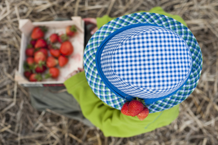 Germany,Saxony,Boy With Blue Hat Holding Box Of Strawberries