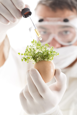 Scientist Adding Chemical From Pipette On Cress In Egg Shell,Close Up