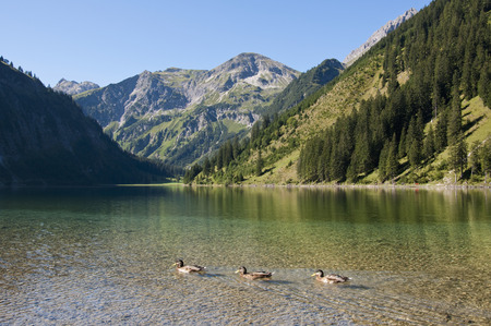 Austria,View Of Lake Vilsalpsee,Ducks In Foreground