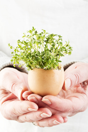 Woman Hand Holding Cress In Egg Shell,Close Up