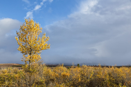 Usa,Alaska,View Of Landscape In Denali National Park