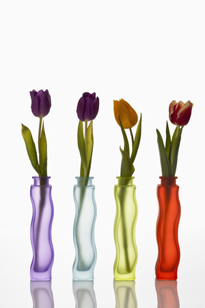 Variety Of Flower Vases With Tulips On White Background, Close Up LANG_EVOIMAGES