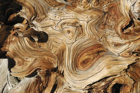 Usa, Nevada, Weathered Wood Of Bristlecone Pine, Close Up
