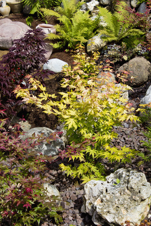 View Of Japanese Maple LANG_EVOIMAGES