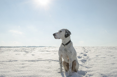Germany,North Rhine Westphalia,Mixed Breed Dog Sitting In Snow